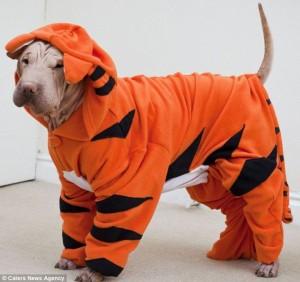 Hond in tijgeronesie