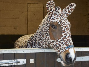 Paard in panteronesie